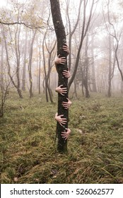 Surreal image of many hands hugging a tree in a foggy forest