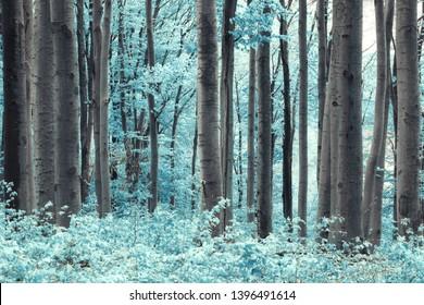 surreal infrared landscape, infrared light photograph