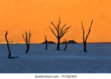Surreal landscape at sunrise in the Namib Desert, Dead Acacia Camel thorn trees at Deadvlei, sossusvlei. Africa
