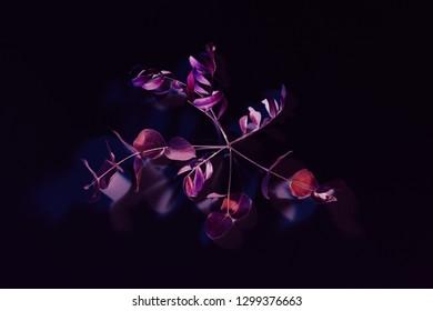 Surreal plant decor. Art minimalism. Red purple stem on black background.