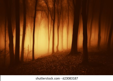 surreal scary forest dark background