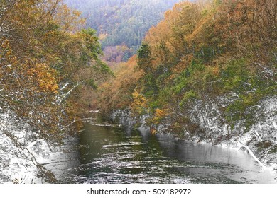 Surrealist photography  in the forest in Autumn, The Fragas of the River Eume, Galicia, Spain, Natural Park, The southernmost Atlantic forest in Europe,