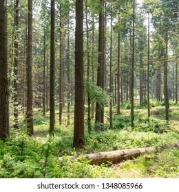 surrey woodland and heath