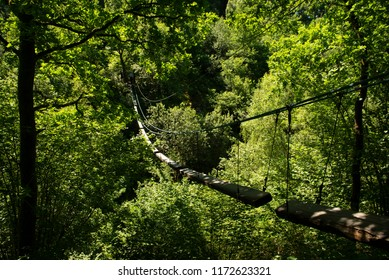 A suspended bridge hangs beneath heavy summer foliage in a forest
