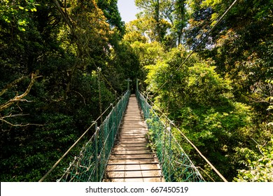 Suspended rainforest walk in the Gold Coast Hinterland, Queensland, Australia