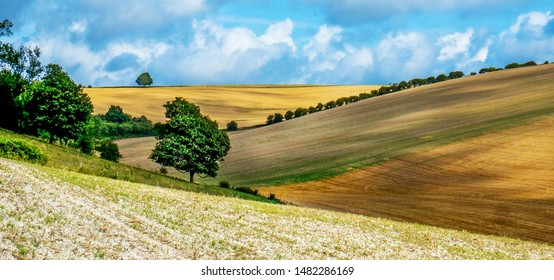 Sussex, English landscape, rolling hills, golden color of the crops growing in the fields, the light is low casting high lights and shadows on the golden hills, Lewes, East Sussex, UK,