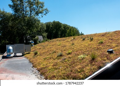 Sustainable building and isoloation, rooftop covered with green plants, grass and flowers