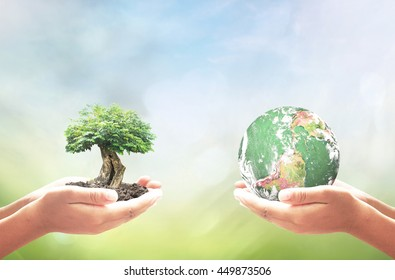 Sustainable development goals (SDGs) concept: Two human hands holding earth globe and big tree over blurred nature background. Elements of this image furnished by NASA