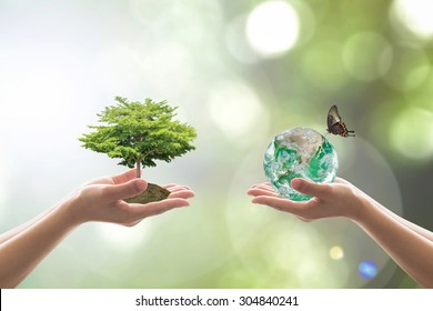 Sustainable environment and saving energy concept with green earth and tree planting on volunteers' hands. Element of the image furnished by NASA