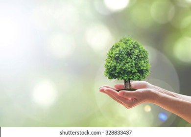 Sustainable environment, Saving environmental sustainability in ecosystem, International day of forest, World forestry day and CSR Go green concept with tree planting growing on volunteer's hands