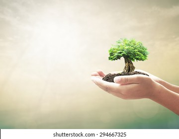 Sustainable environmental development concept: Human hand holding growth tree over blurred abstract nature background