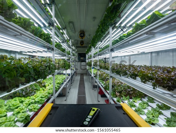 Sustainable modern hydroponic vegetables production