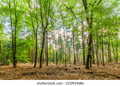 Sustainably managed natural forest with dead wood on the forest floor strengthens nature development and a healthy environment for the realization of biodiversity and natural biotopes