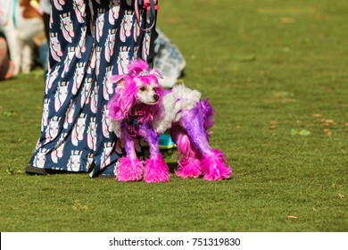 SUWANEE, GA - MAY 6:  A poodle with fur dyed purple and wearing a tiara, stands with its owner in a park at Woofstock, a dog festival at Suwanee Town Center on May 6, 2017 in Suwanee, GA.