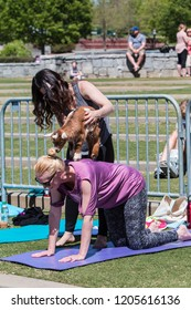 Suwanee, GA / USA - April 29 2018:  A woman places a baby goat on the back of a kneeling woman as part of a goat yoga class in a public park on April 29, 2018 in Suwanee, GA.