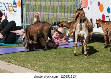 Suwanee, GA / USA - April 29 2018:  Goats gather around a woman stretching in a free goat yoga class at Suwanee Towne Park on April 29, 2018 in Suwanee, GA.