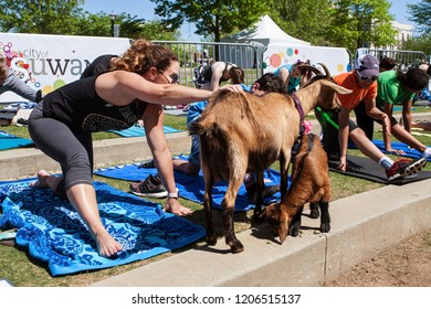 Suwanee, GA / USA - April 29 2018:  A woman pets a goat while stretching at a goat yoga class in a public park on April 29, 2018 in Suwanee, GA.