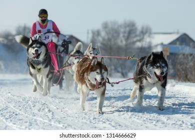 Suzdal, Russia - February 24, 2018: Dog sled racing. Husky racing dogs running in the snow.
