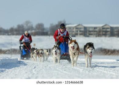 Suzdal, Russia - February 24, 2018: Dog sled racing. Racing dog sledding frosty snowy winter.