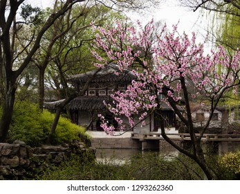 Suzhou, China - March 23, 2016: Springtime in Humble Administrator's Garden, one of the most famous classical gardens of Suzhou