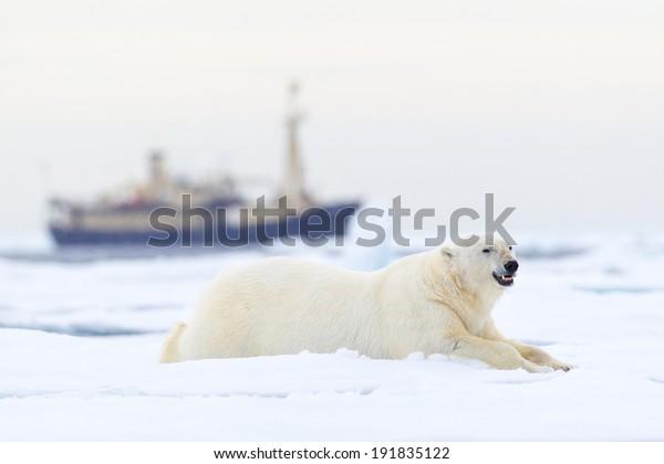 Svalbard Expedition