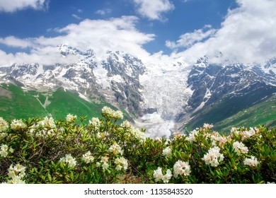 Svaneti nature landscape on summer day with blue sky and white flowers. Snowy peaks of rocky mountains Tetnuldi and Gistola, glacier Lardaad and rhododendrons on foreground. Scenery georgian nature