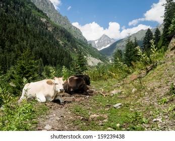 Svaneti region in Georgia, Caucasus.