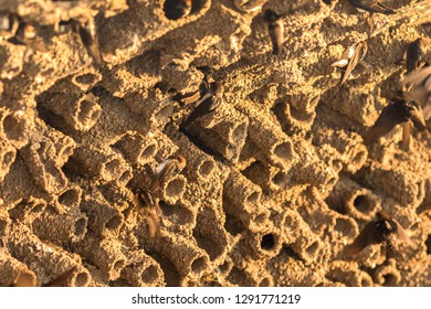 Swallow bird nests are made of mud pellets and some fibrous material and are often built under eaves, bridges, docks, or other man-made structures. A swallow bird nests of mud in early morning.