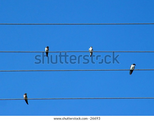 Swallows on power lines against a blue background