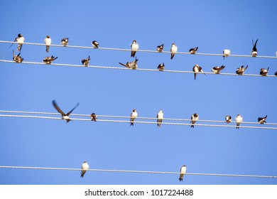 swallows sit on wires against the background of the blue sky