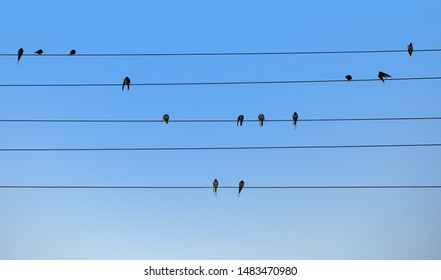 Swallows are sitting on electric wires. Bird notes. Natural music concept.