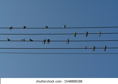 Swallows, sitting on the wires against the clear blue sky like notes on the stave. A birds on five electric wires looking like musical notes