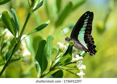 アオハギと白い花