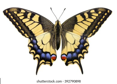 Swallowtail (Papilio machaon) isolated on white