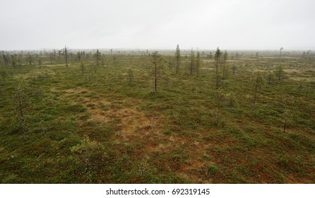 Swamp area in Martimoaava, Northern Finland, Lapland