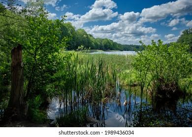 "Swamp area at the northern banks of Berlin ""Grunewaldsee"" (""Lake Grunewald"")"