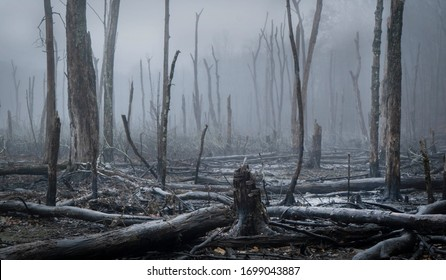 A swamp and bare trees seen through the mist