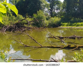 Swamp with dirty water is overgrown with algae and silt and looks scary