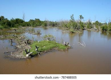 Swamp in Dominican republic