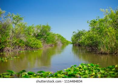 Swamp and Grass of Everglades National Park. Florida. USA.