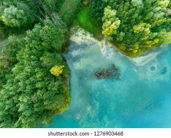 Swamp in Jumieges, Seine-Maritime, Normandy, France