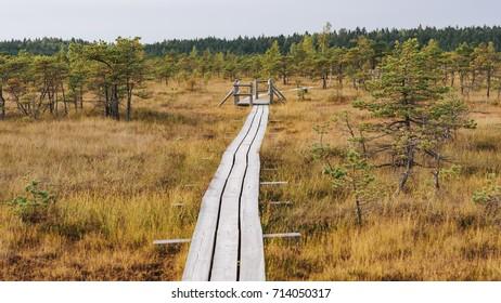 Swamp in Kemeri National Park, Kemeri, Latvia.