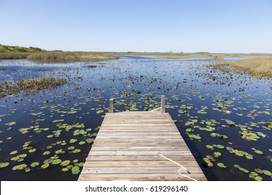 Swamp landscape in the Everglades National Park in Florida, United States