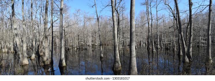 Swamp in Lee Tartt Nature Preserve in Grenada Mississippi