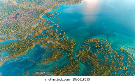 swamp, mafia island