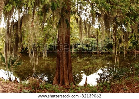 Swamp.  At Magnolia Plantation.