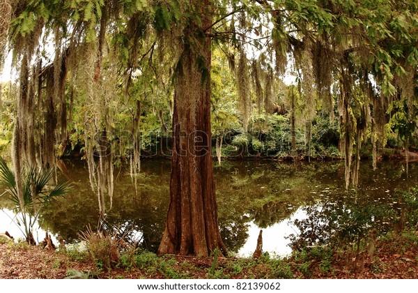 Swamp.  At Magnolia Plantation.
