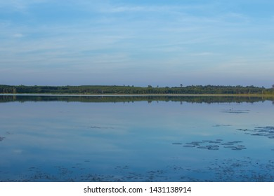 Swamp marshland water landscape. Swamp land backwater panorama. Swamp trees bog backwater view