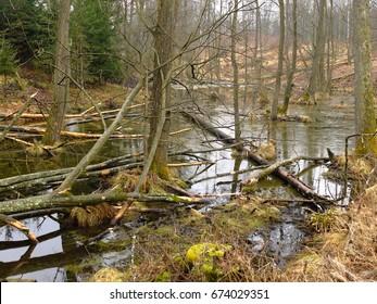 Swamp in Masuria region, Poland