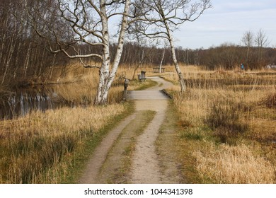 Swamp national park the biesbosch in the Netherlands in autumn